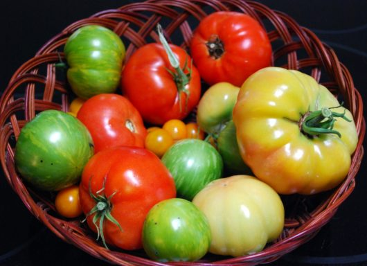 Assorted Jersey Tomatoes and Heirloom Tomatoes
