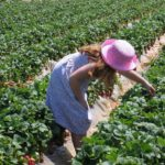 young girl picking strawberries
