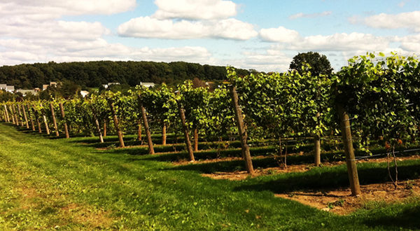 Beneduce Winery