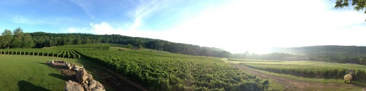 Alba Vineyards