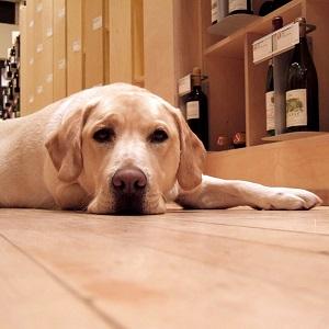 Rufus at Amanti Vino