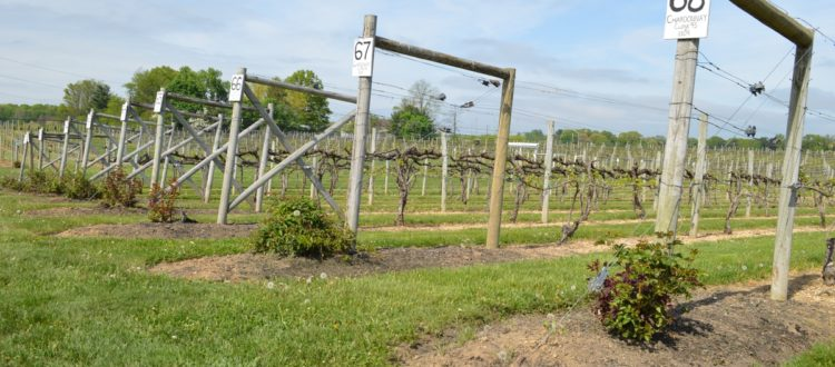 working dog winery
