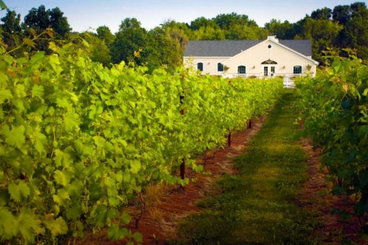 Photo Credit - Hopewell Valley Vineyards