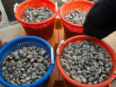 shellfish from heritage shellfish cooperative