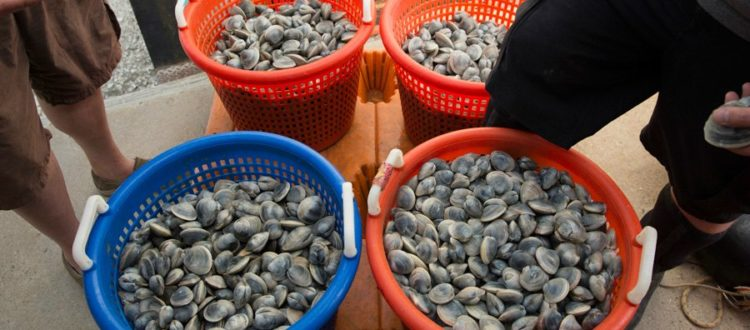 shellfish from heritage shellfish cooperative