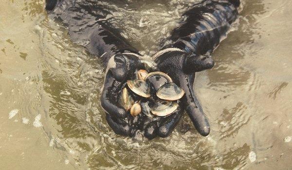 Heritage Shellfish Cooperative