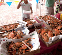 Crabs at the Cape May Craft Beer and Crab Festival