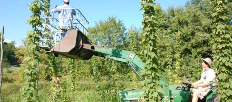 New Jersey hops farms