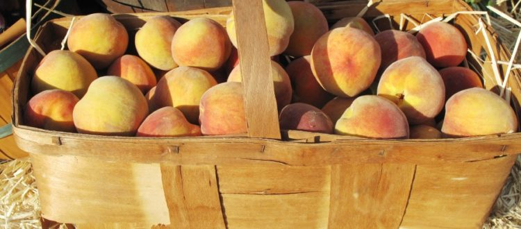 New Jersey Peaches