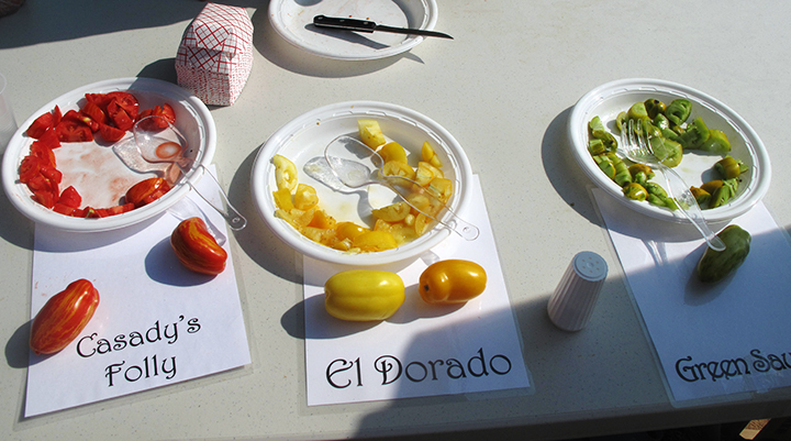 Some tomato varieties at the Great Tomato Tasting