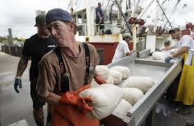 bagged scallops offloaded