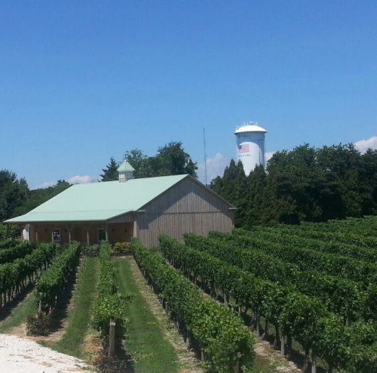 Cape May Winery Vineyard, Jersey Bites, Charlie Toms
