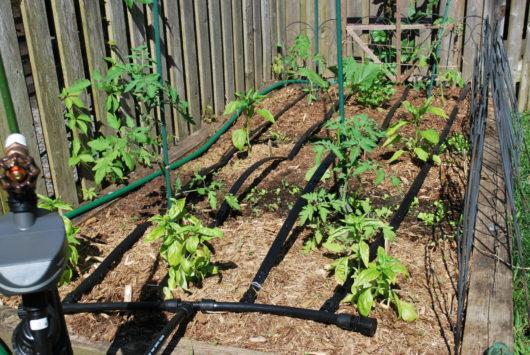 auto irrigation system Yard 2 Kitchen