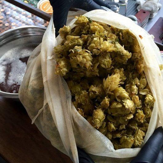 Fresh hops grown for Man Skirt Brewing.