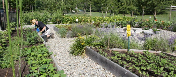 The main garden at Fulfill's Community Garden Program