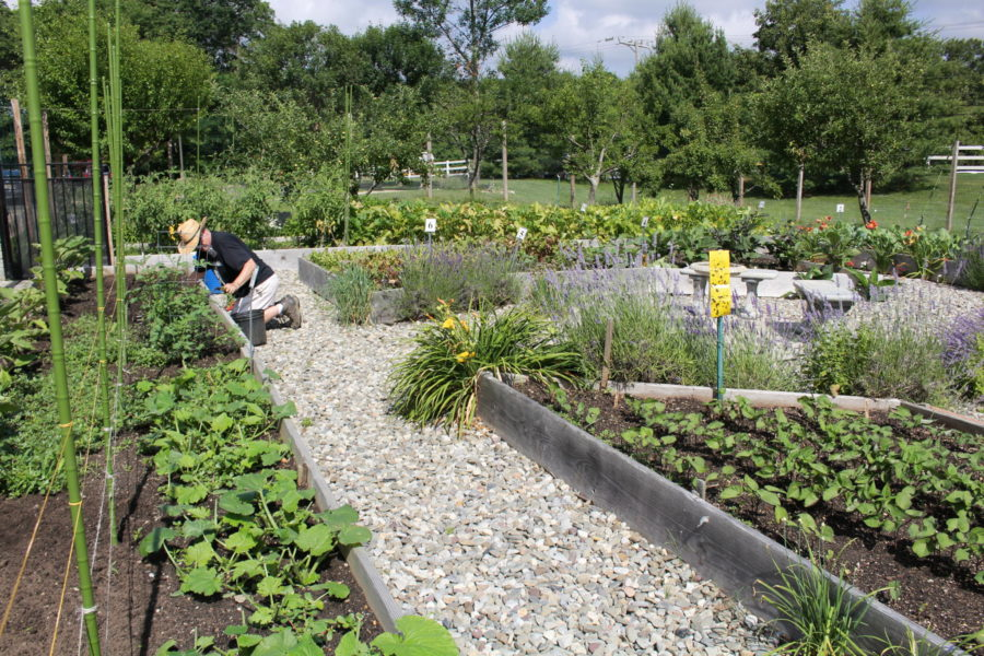 The main garden at Fulfill's Community Garden Program
