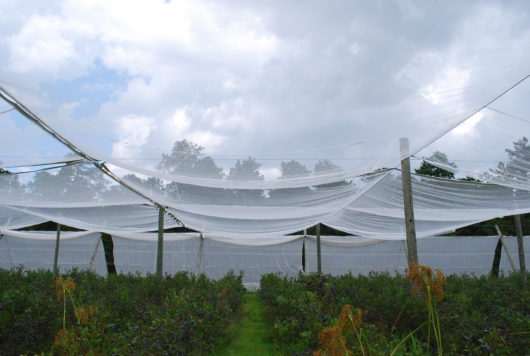 retractable netting at FullBlue360 famr
