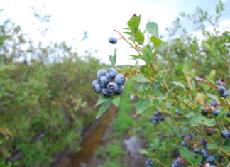 FullBlue360 blueberry farm