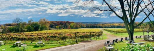 fall view of the vineyards