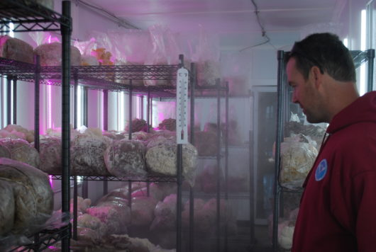 KC in the fruiting room