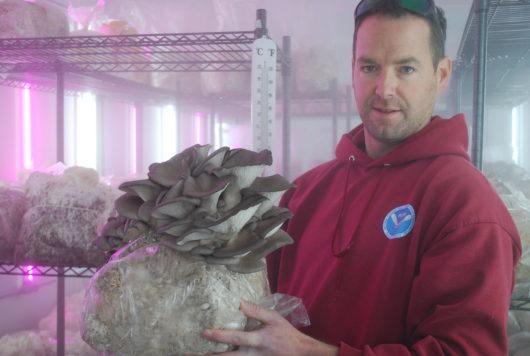 KC Sullivan in his Mushroom fruiting room